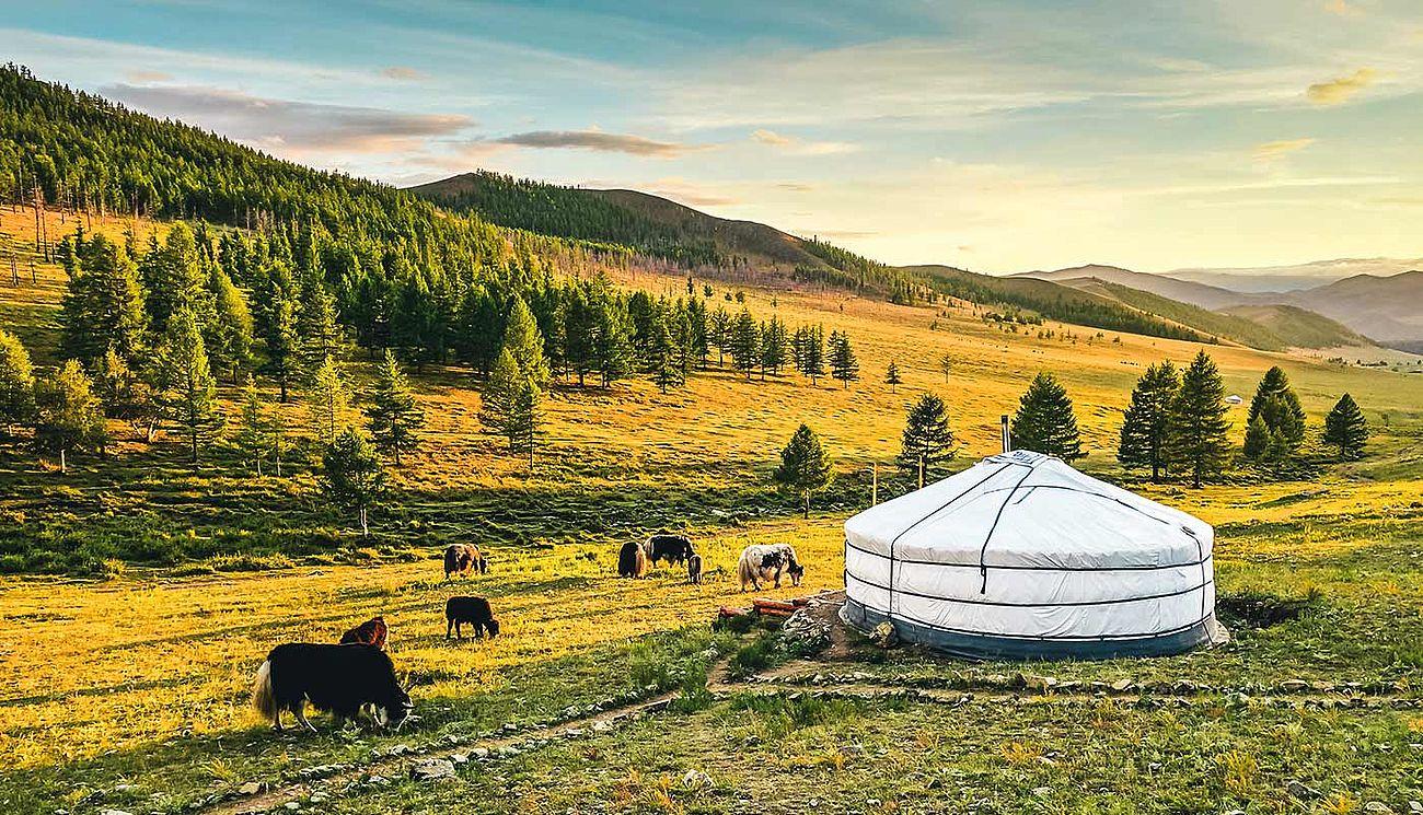 mongolei reisezeit