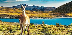 Patagoniens Highlights in 2 Wochen